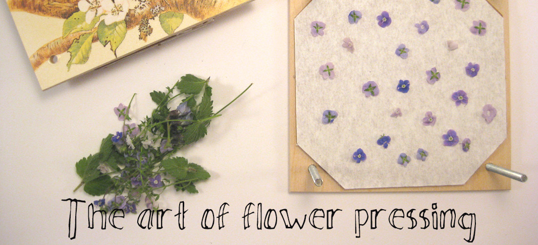 tutorial on the art of flower pressing the craft corner
